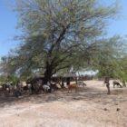 Latin America's Rural Exodus Undermines Food Security